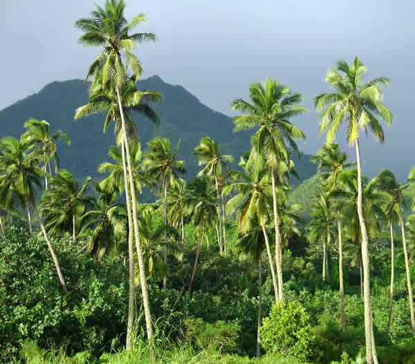 Pasific Island Flora