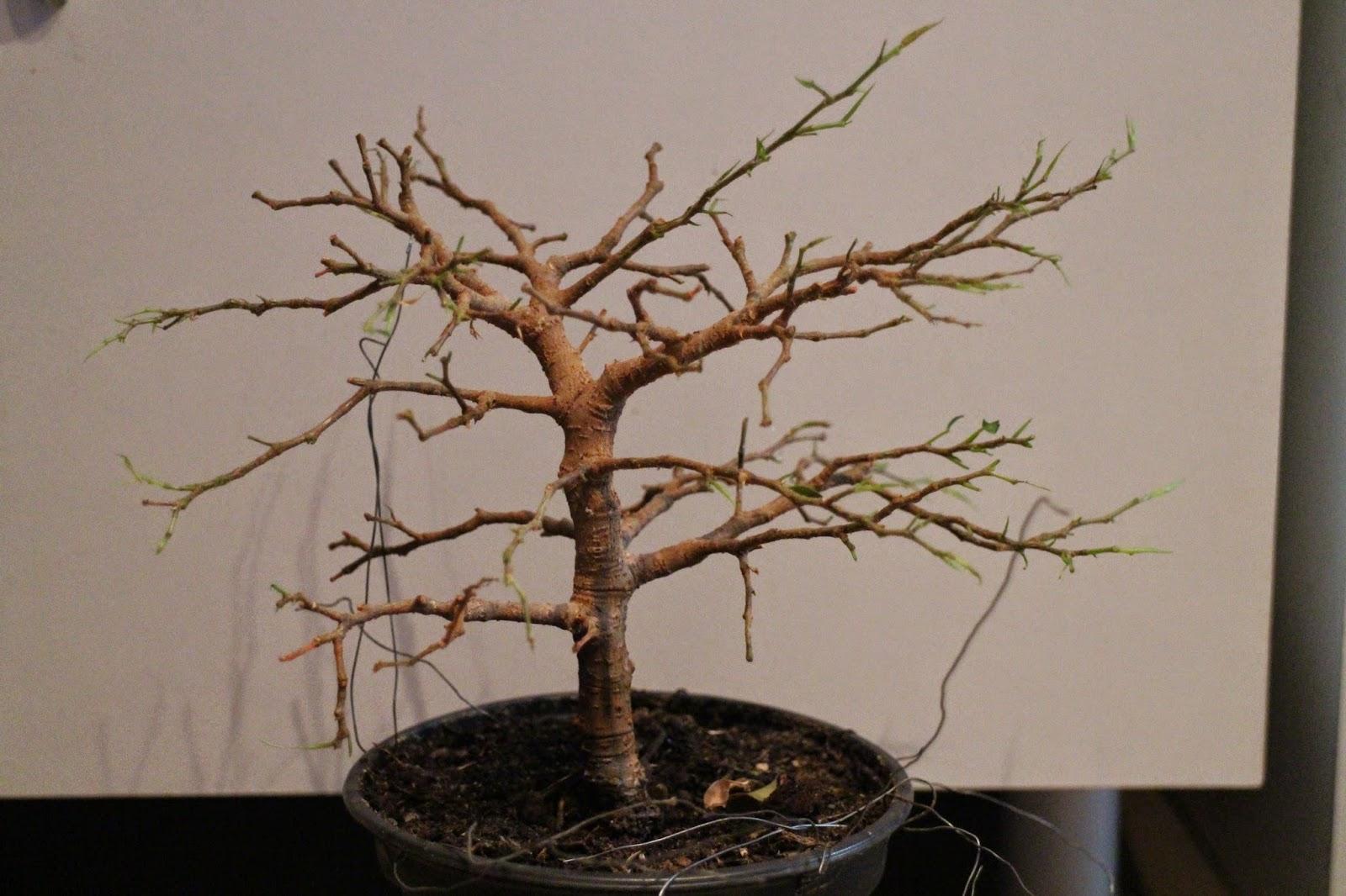 pieniä ötököitä kasvissa
