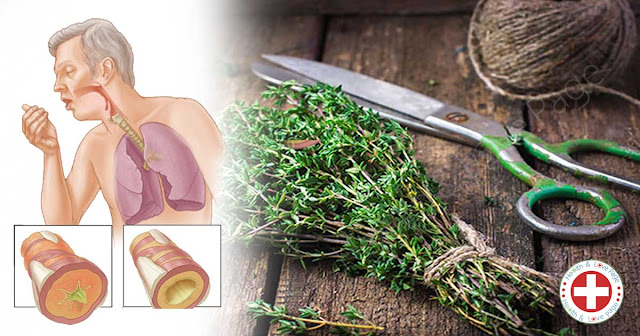 Powerful Herbs to Kill Infections and Clear Mucus from your Lungs