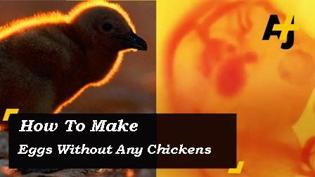 How To Make Eggs Without Any Chickens (VIDEO)