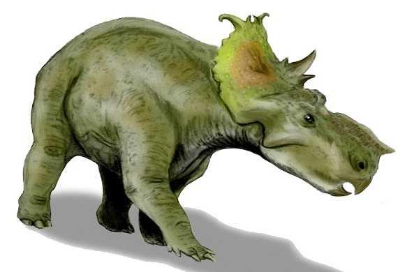 pachyrhinosaurus-باكيراينوسوراس