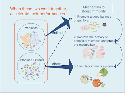 how prebiotics work