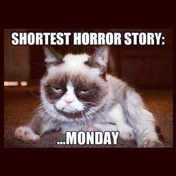 Grumpy Cat Memes 9
