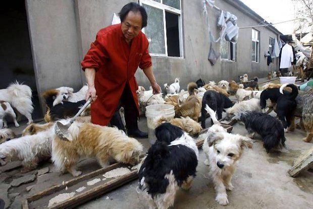 Chinese Man Feeds And Cares For 140 Adopted Dogs