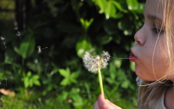 Wallpaper: Little girl blowing dandelion