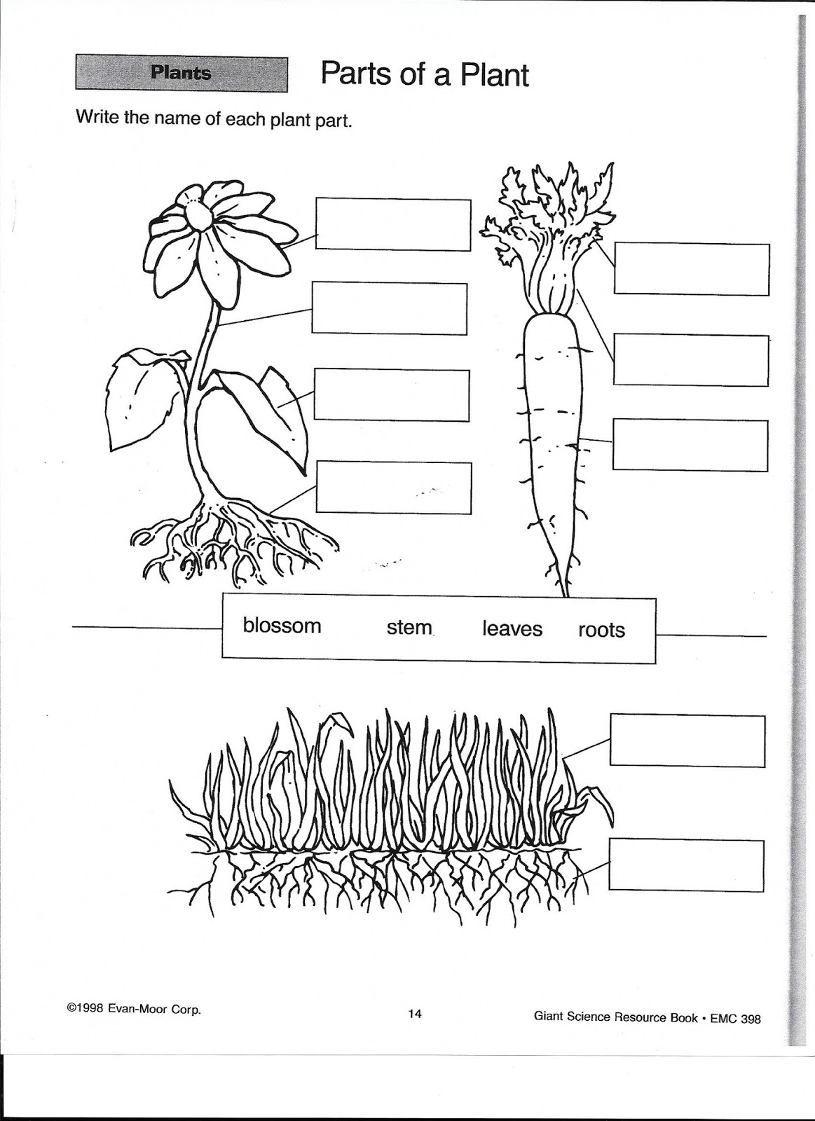 Vascular And Non Vascular Plants Worksheet