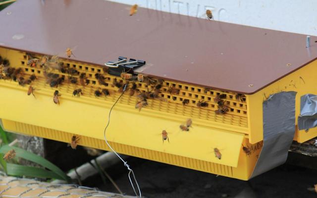 Η συλλογή της γύρης: Μυστικά και εμπειρίες από παλιό μελισσοκόμο (video)