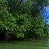 Pulau Peucang Keindahan Yang Tersembunyi ( Hari Ke Dua )