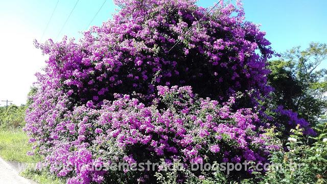 Flores no interior de Garibaldi, RS