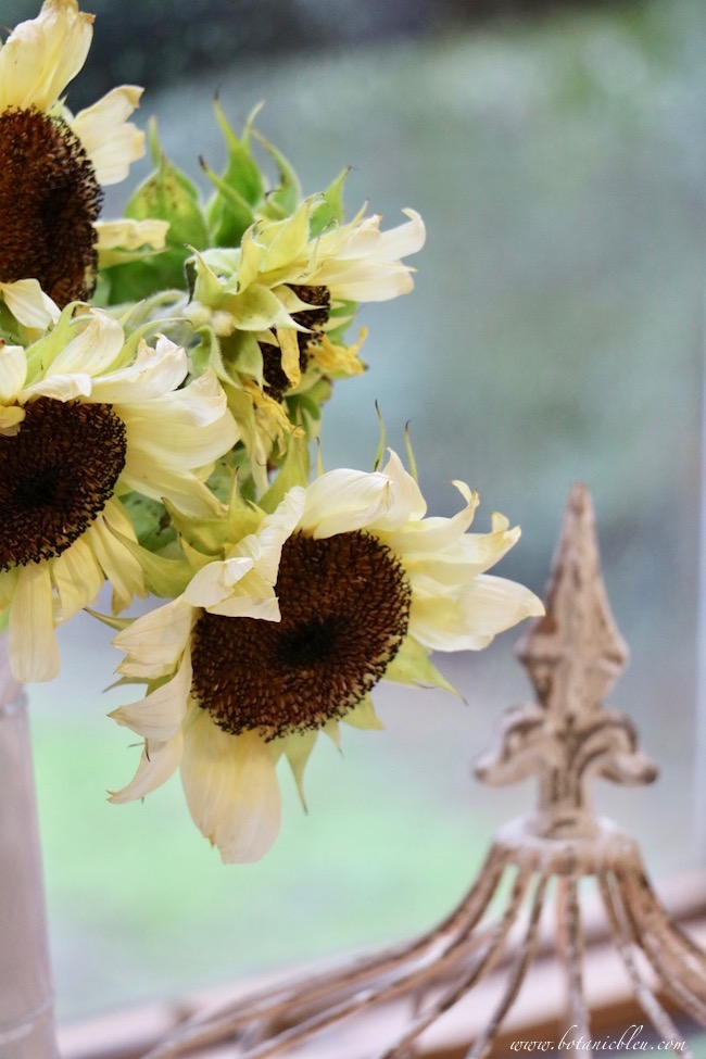 white sunflowers and wire cloche add french country fall to a breakfast sunspace