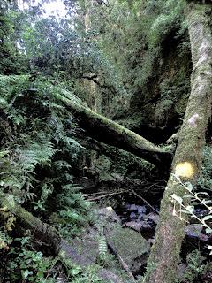 Trilha da Cachoeira Gêmeas Gigantes no Parque das 8 Cachoeiras, em São Francisco de Paula