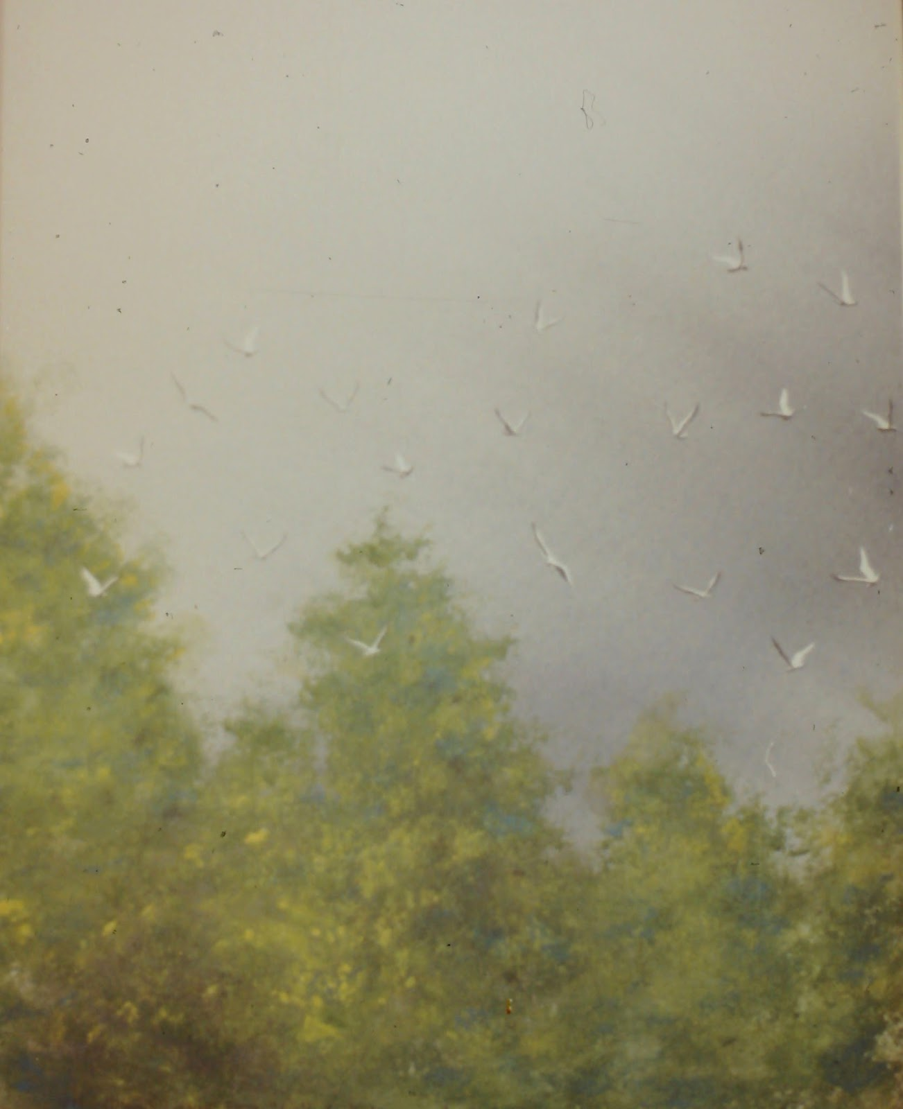 Seagulls Following the Plow, near Edzell, Angus, Scotland  40x32 inches. Watercolor on paper, c. 1992.  In a private collection in Boise, Idaho by Lenny Campello