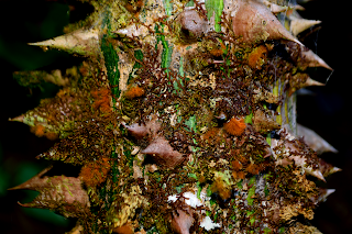 Kapok Tree Bark Art