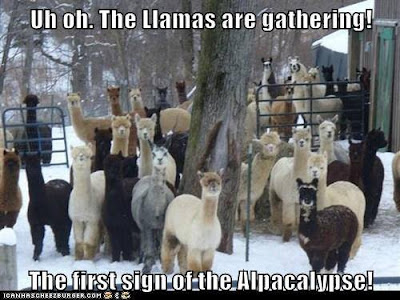 Uh Oh. The Llamas are gathering..the first sign of the Alpacalypse