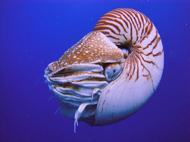 Oldest Surviving Species