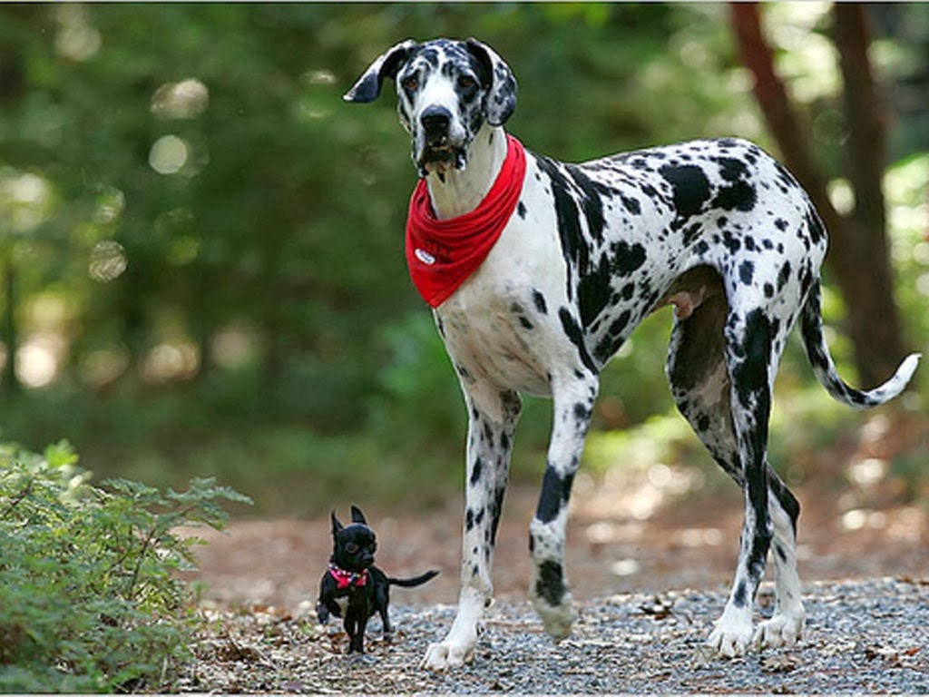 Cute Puppy Wallpapers For Iphone Dalmatian Puppies Wallpaper Image Free Hd Wallpaper