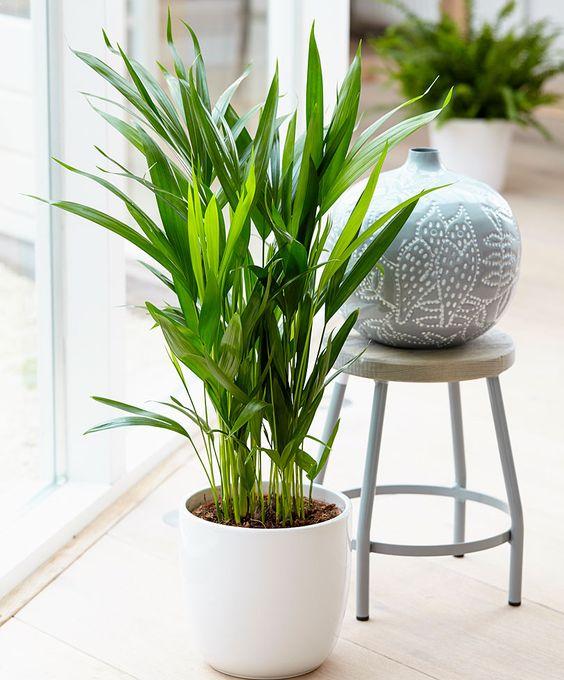 Um jardim para cuidar plantas que ajudam a purificar o ar for Planta tropical interior