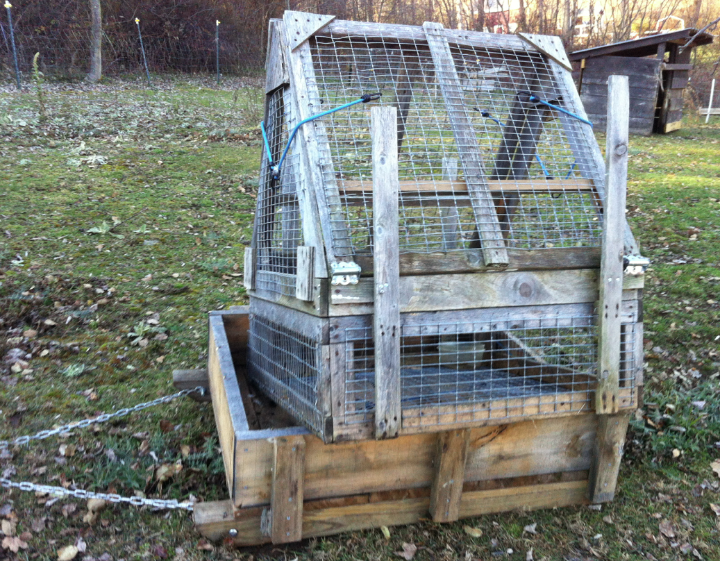 coldantlerfarm: Trap Is Set (Thanks to Ed, Buddy, and Merlin)