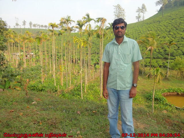 Tea Plantations in Wayanad