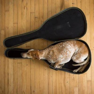 chien musicien