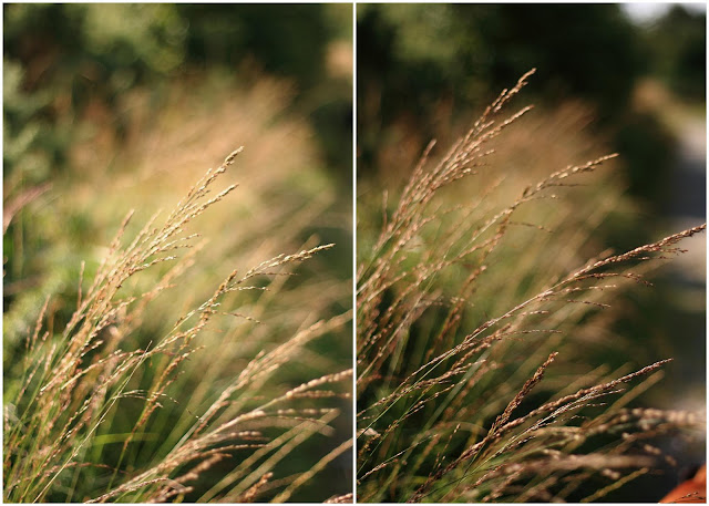 summer grasses collage