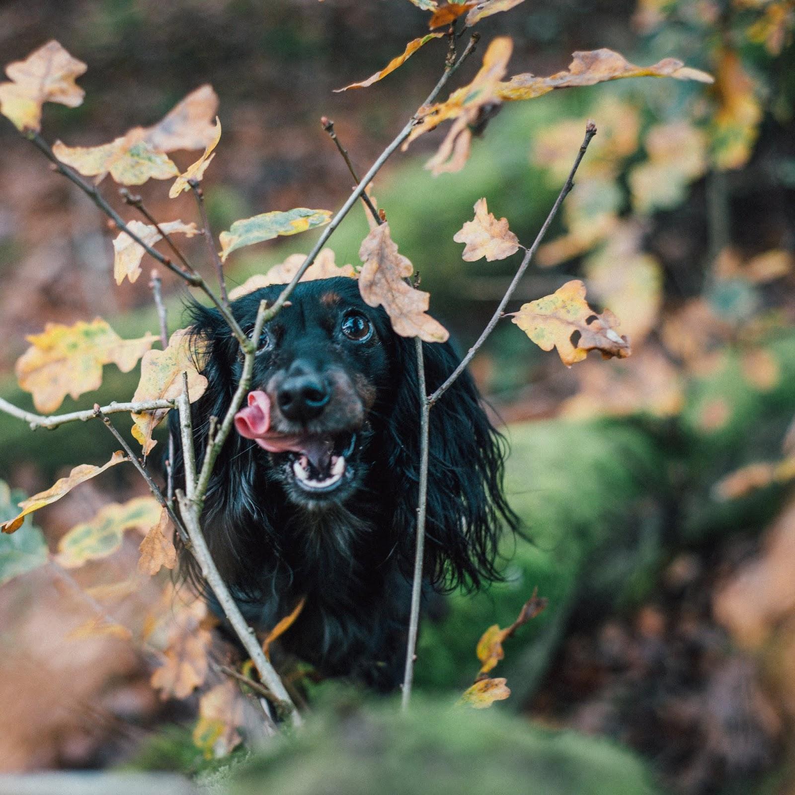 dachshund cocker spaniel on leafy tree liquidgrain liquid grain