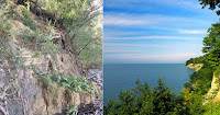 Eroded bluff and Lake Erie coastline. (Bluff Photo Credit:  Lisa Kenion) Click to Enlarge.