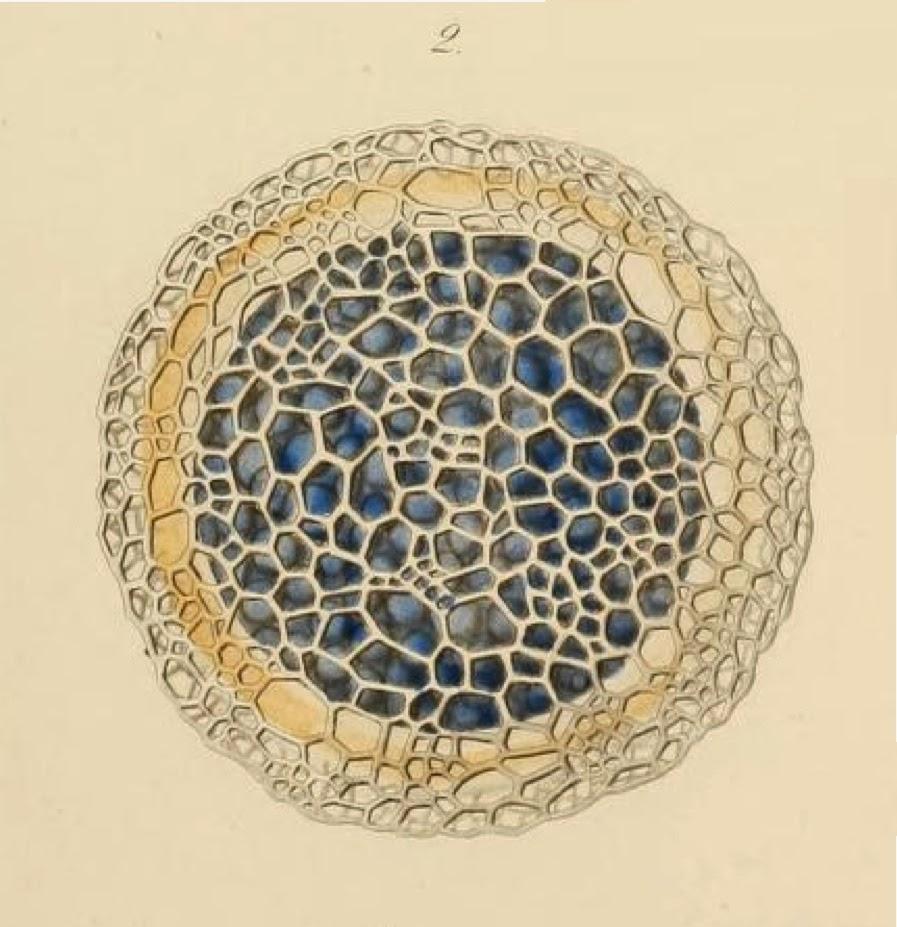 microscopic-organisms