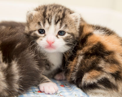 Cats Protection Bridgend Adoption Centre kitten