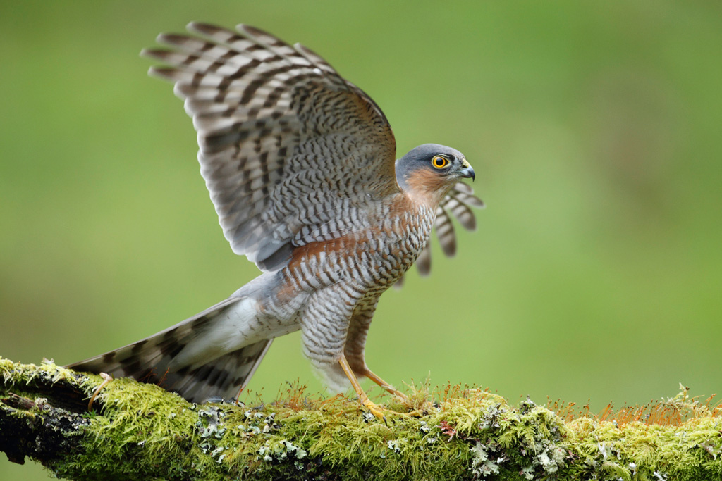 sparrow hawk red Ricardo (``ricky'') lives with his widower father benito in an arizona border town  benito, formerly with the drug enforcement agency,.