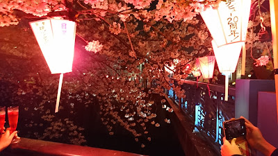 Hanami Meguro River, Keindahan Bunga Sakura di atas Sungai Maguro, Jepang