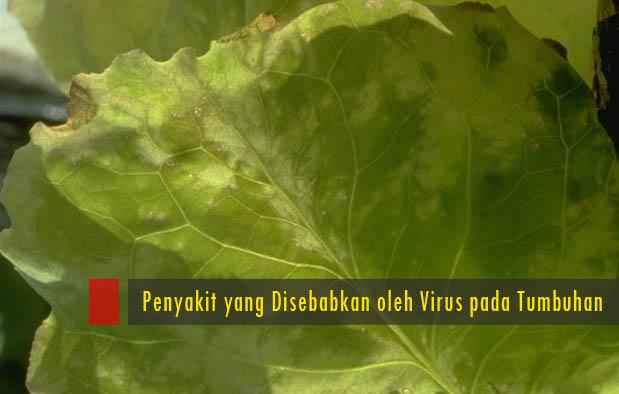virus ternyata juga dapat melakukan infeksi pada tumbuhan 6 Penyakit Yang Disebabkan Oleh Virus Pada Tumbuhan