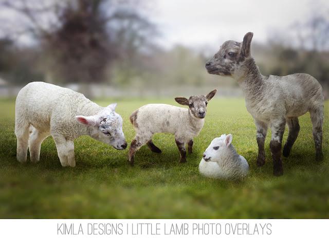 https://4.bp.blogspot.com/-dFivGubGGXQ/VvAF1BRf-GI/AAAAAAAACTw/SIv1fhN8Q9gSKqQ66UlZJZUe19NXqOXoQ/s640/Kimla-Designs-Little-Lamb-Photo-Overlays.jpg