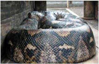ular terbesar