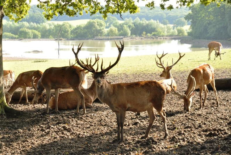 Tea masters un th dans le parc animalier de sainte croix for Parc animalier dans les yvelines
