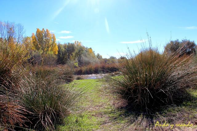 El río Guadarrama al paso por el yacimiento romano de Carranque