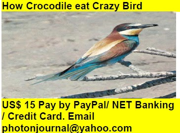 How Crocodile eat Crazy Bird bird story book