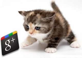 kitty with Google plus