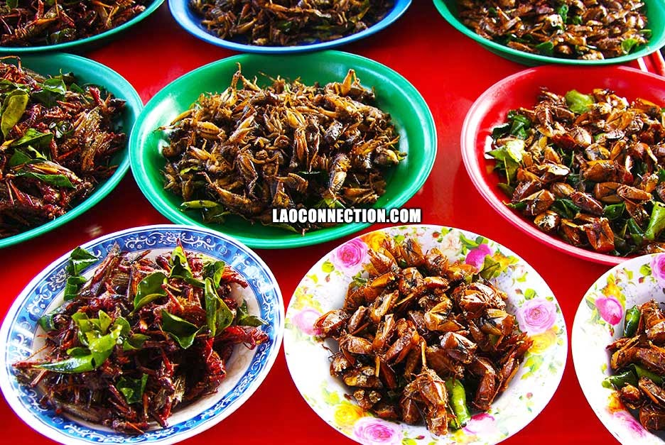 Lao food - insect dishes buffet