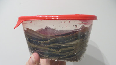 Growing mushrooms at home - beginner's experience