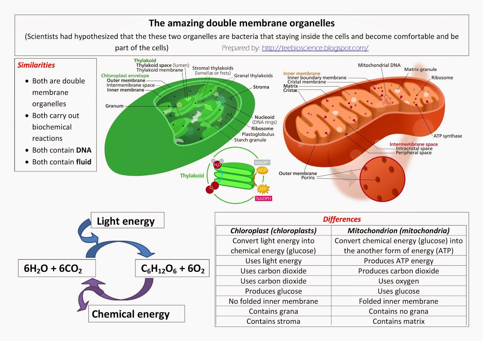 Which Organelle Should Be Listed Under Plant Only In The ...