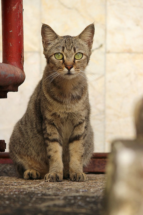 cats of phuket