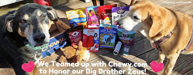 We Teamed Up with our friends at Chewy.com to Honor and Celebrate Zeus' Life #CelebrateLife #InHonorofZeus #doggiveaway #Chewy #LapdogCreations #dogbirthday ©LapdogCreations