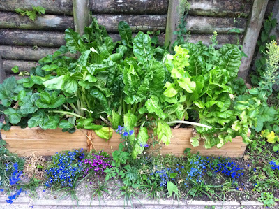 Craving Fresh: Homegrown - Herbs, bees and leafy greens