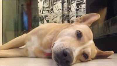 Προσοχή: Φόλες στην Παραμυθιά - Νεκροί 2 σκύλοι σε λίγες ώρες
