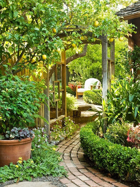 lovely garden way with lemon tree