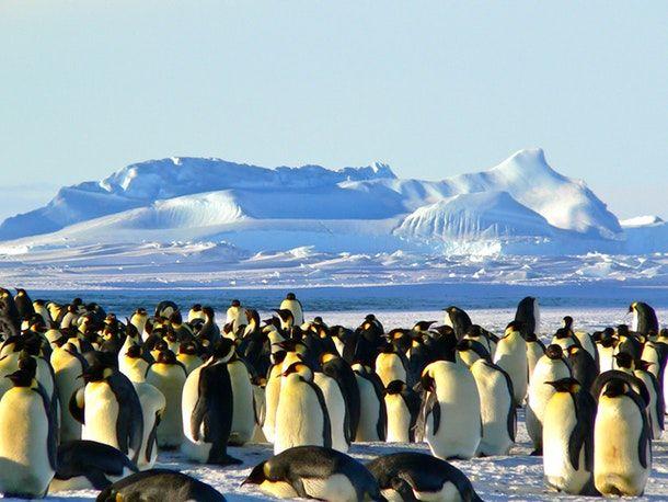 Penguin Group Photo - penguin in hindi