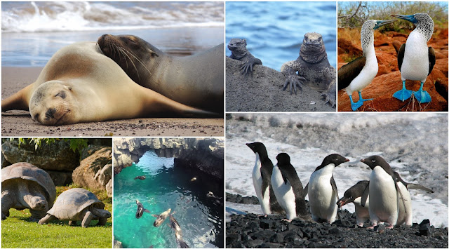 Wildlife of Galapagos Islands