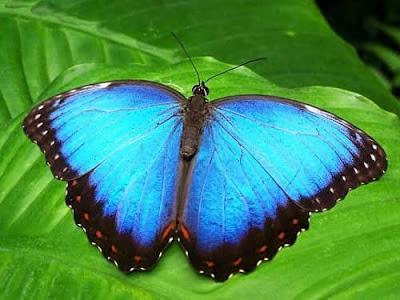 cerita tentang kupu-kupu