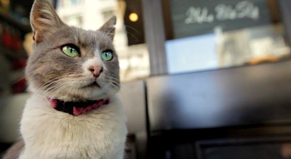 kedi istanbul